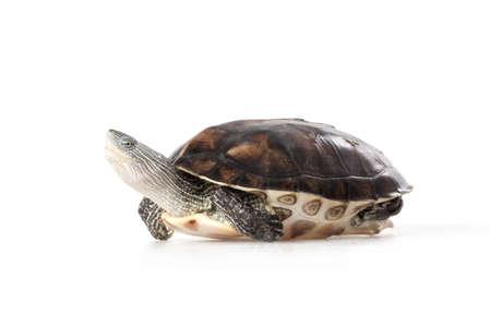 Portrait of cute tortoise,studio shot