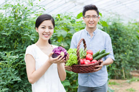 smiling woman in a greenhouse: Young couple picking vegetables in greenhouse