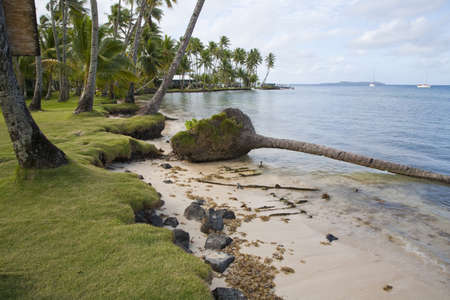 federated: Fallen palm tree on beach side,Chuuk, Federated States of Micronesia LANG_EVOIMAGES