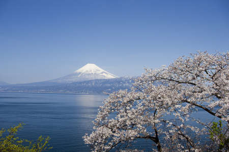 Cherry blossoms and Mt. Fuji,Japan LANG_EVOIMAGES