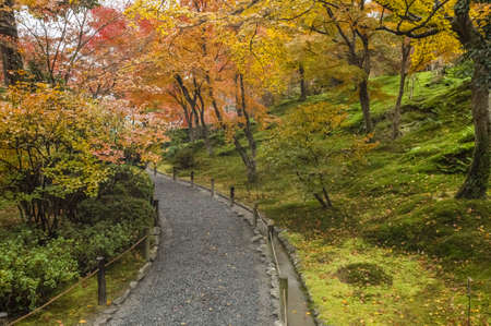 Autumn View of Trees in Kyoto, Japan