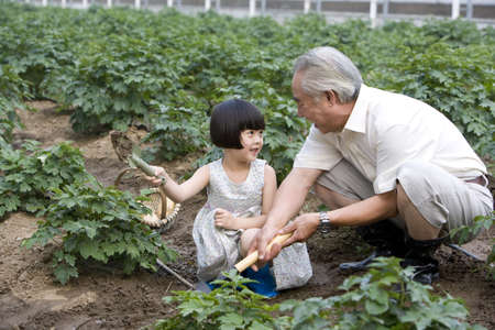 dug well: Grandfather and granddaughter gardening