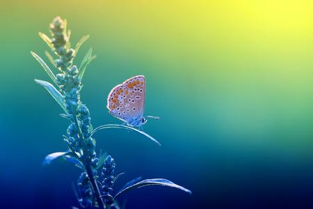A beautiful little butterfly