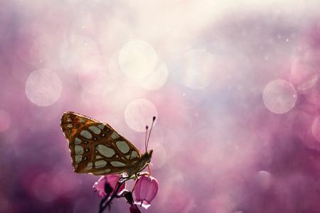 素敵な背景には、蝶のカラフルな世界