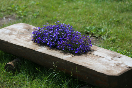 Flowers to compose in the garden
