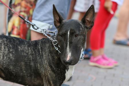 Harmless look race dog