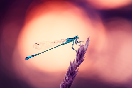 Dragonfly Hunter outros insetos Foto de archivo - 83126020