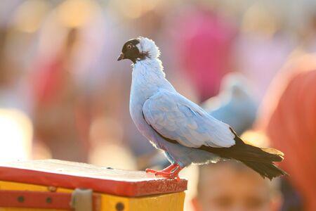 Pretty tame dove in the show