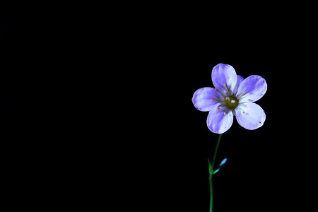 A small lovely flower