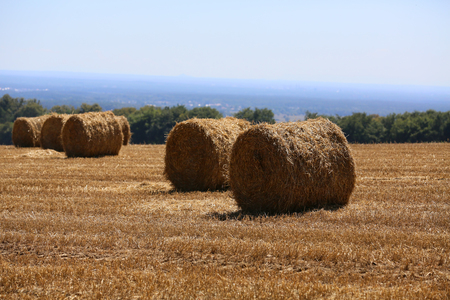 Straw from cereals as a natural background