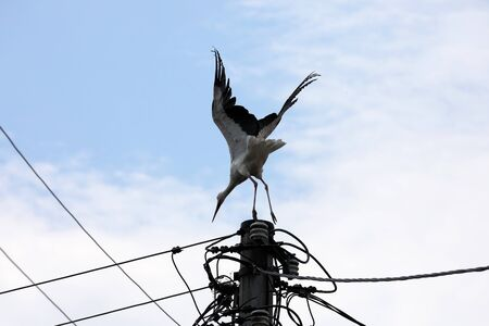 The stork on a high pole is rising into the air 免版税图像