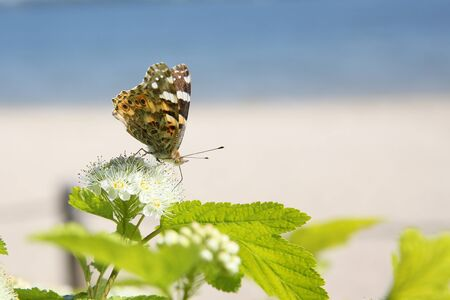 Small nymph butterfly in my garden on the interesting background looks beautiful