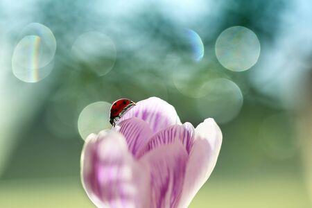 Ladybug living in my garden is beautiful.