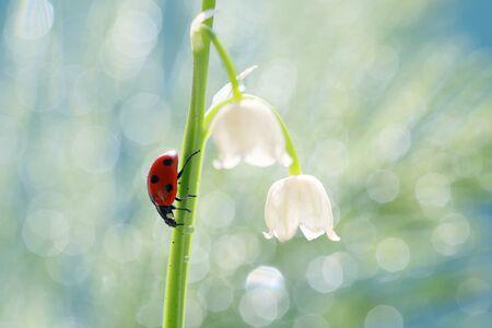 A little red ladybug from my garden. Standard-Bild