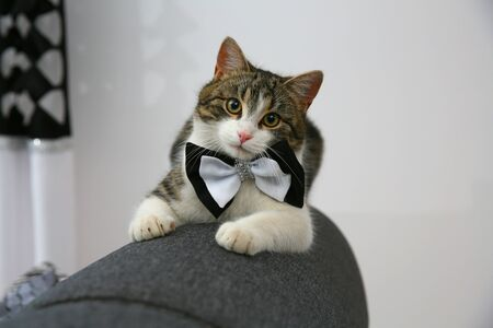 A small roofer at home with a bow tie around his neck
