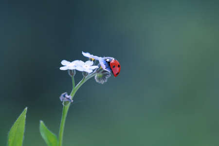 Little red ladybug from my flower garden