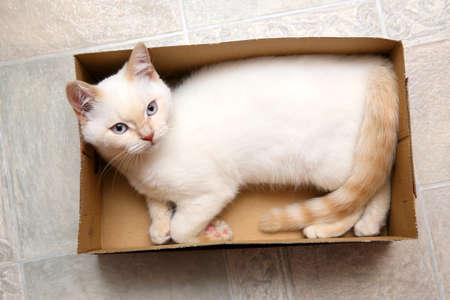 The little kitten is lying in the box and is having fun Standard-Bild
