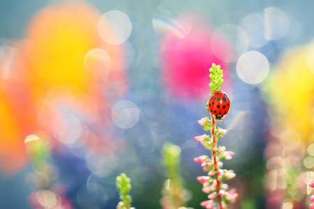 A little ladybug is walking through the flowers in the garden