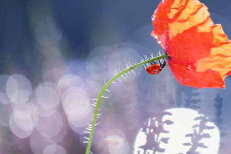 A little ladybug is walking through the flowers Standard-Bild