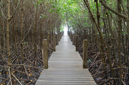light at the end of pathwalk in mangrove forest photo