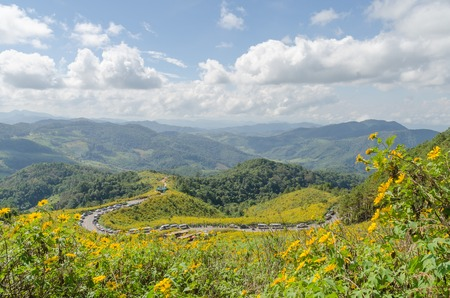 Mexican sunflower mountain in maehongson province north of thailand photo