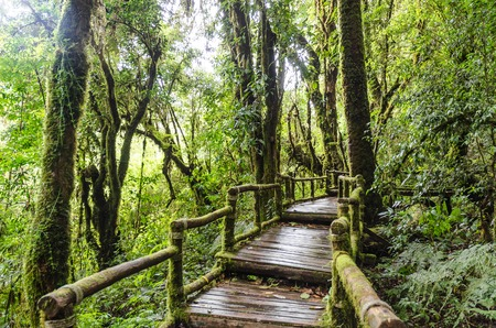 Pathway in forest at doi inthanon chiangmai thailand photo