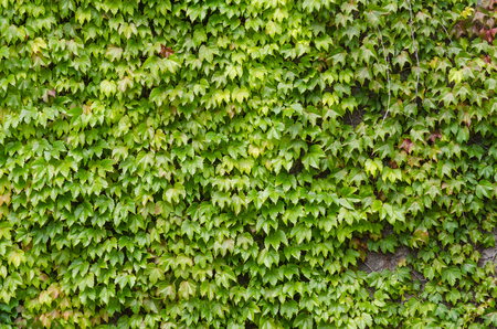 fence: Green leaves wall background
