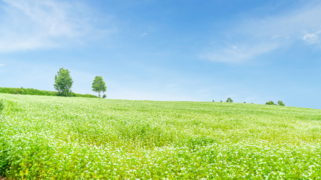 biei: Beautiful green field and blue sky in summer at biei hokkaido japan