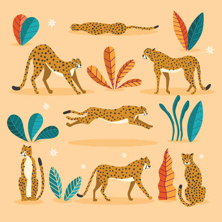 Collection of cute hand drawn cheetahs on pink background, standing, stretching, running and walking with exotic plants. Flat vector illustration Illustration