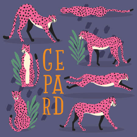 Collection of cute hand drawn pink cheetahs on dark purple background, standing, stretching, running and walking with exotic plants and hand lettering. Flat vector illustration