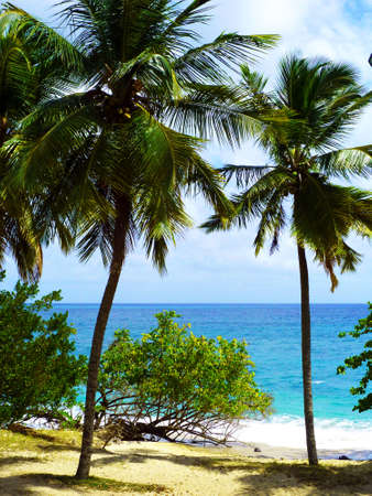 Carribean Sea and Palmtrees in Martinique