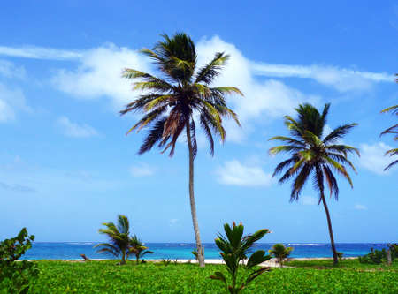 Carribean Wild Seascape in Martinique