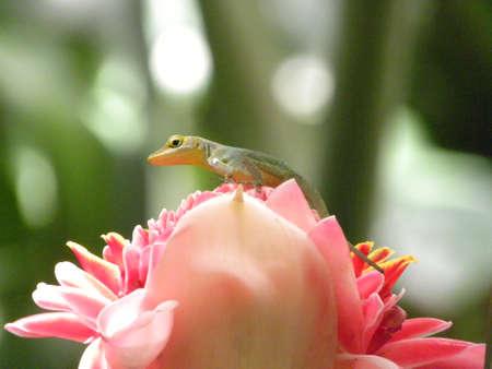Lizard on flower Stock Photo