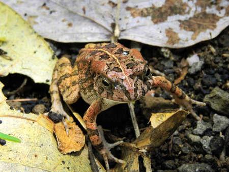 frog                             Stock Photo - 15630875