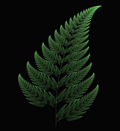 Fern leaf, fractal art Stock Photo - 16834015
