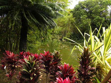 Botanical Gardens in Guadeloupe