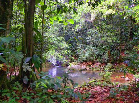 tropical rainforest vegetation Stock Photo