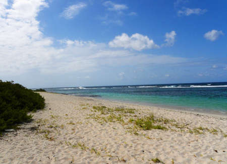 guadalupe island:  Typical Beach guadalupe island