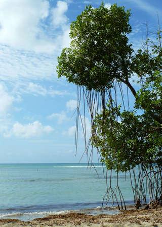 Tropical vegetation on the seashore Stock Photo