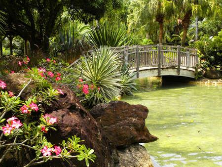 Tropical garden Stock Photo - 17499695
