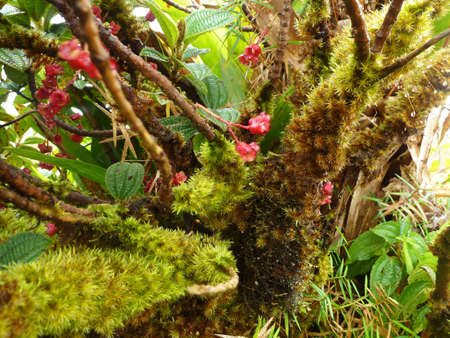 Tropical Forest undergrowth