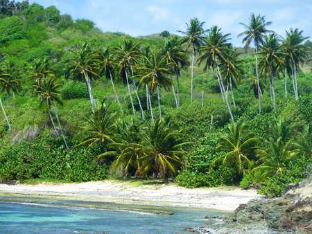 Vegetation on the shore Stock Photo - 18268829