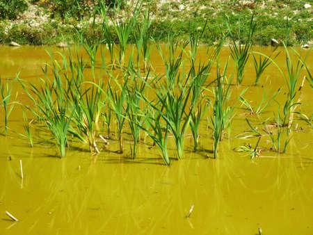 morass: swamp Stock Photo