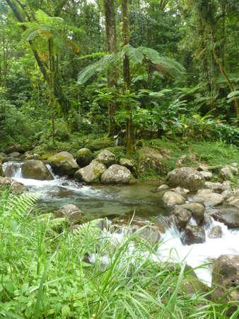 Fresh stream on tropical rainforest