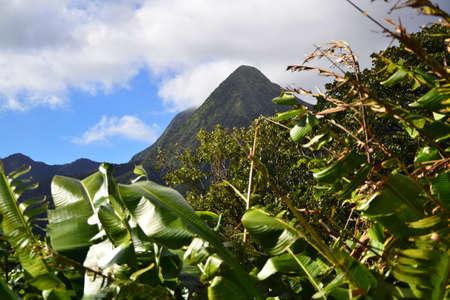 Equatorial forest vegetation