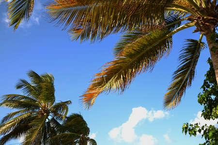 convection: foglie di palma nel vento Archivio Fotografico