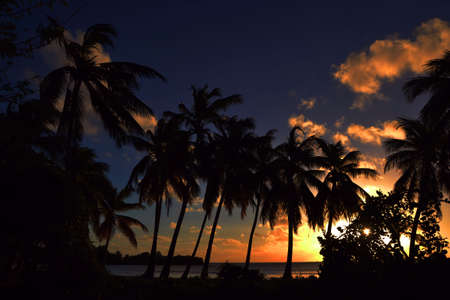 Group of Palm trees at sunset