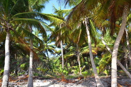 colonization: Palm trees growing on the beach Stock Photo