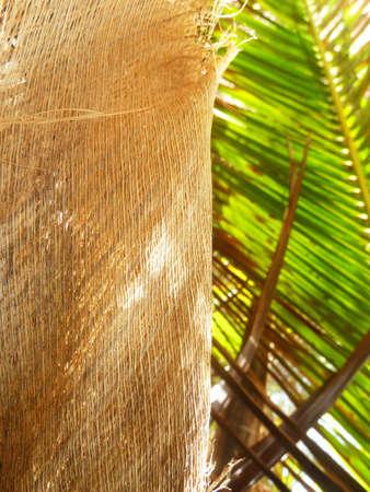 Coconut Palm tree leaf and fiber Stock Photo
