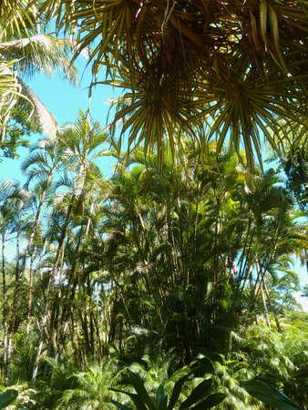 clump of palms Stock Photo